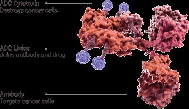 Antibody-drug Conjugate/ADC Related